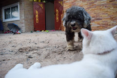 Белый кот и черная собака Стоковые Изображения