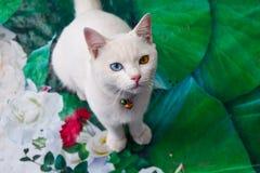 Белый кот на зеленой предпосылке Стоковая Фотография RF