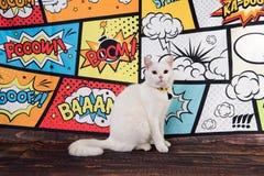 Белый кот на шуточной предпосылке стоковые фотографии rf