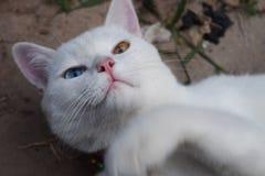 Белый кот ослабляет на саде Стоковая Фотография RF