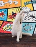 Белый кот пробивая на шуточной предпосылке стоковое фото rf
