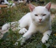 Белый кот сидит на саде Стоковые Фотографии RF