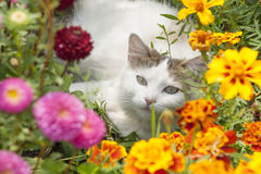 Белый кот сидя в цветках Стоковые Изображения RF