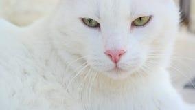 Белый кот снаружи Стоковые Изображения