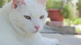 Белый кот снаружи Стоковые Фотографии RF