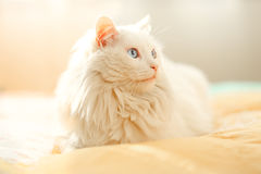Белый кот, солнечный день Стоковое фото RF