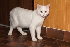 Белый кот стоя около двери Стоковое Изображение RF