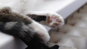 Белый кот страны отдыхая на windowsill видеоматериал