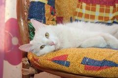 Белый кот с желтым цветом наблюдает лежать на motley Стоковая Фотография