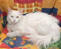 Белый кот с желтым цветом наблюдает лежать на motley Стоковое Изображение RF
