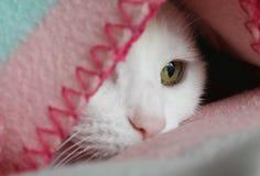 Белый кот с зелеными глазами Стоковое Изображение