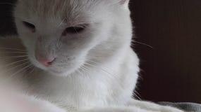 Белый кот chiling Стоковые Фото