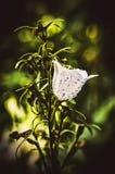 Белый колокол Стоковые Фото