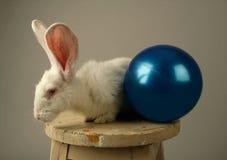Белый кролик и шарик игрушки Стоковое фото RF
