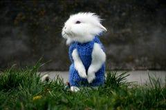 Белый кролик стоя в зеленой траве Стоковое Изображение