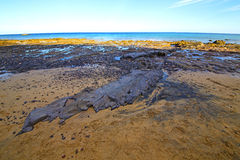 белый Лансароте в воде и лете камня пляжа Испании Стоковое фото RF