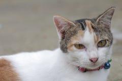 Белый милый кот на к югу от Таиланде Стоковое Фото