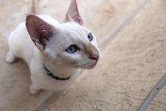 Белый милый кот стоковые изображения rf