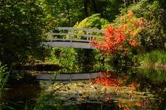 Белый мост с азалиями Стоковая Фотография