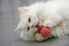 Белый персидский kittenplaying с игрушкой Стоковая Фотография