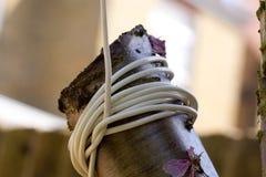 Белый покрытый кабель связал вокруг дерева Стоковое фото RF