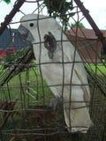 Белый попугай в клетке Стоковое Изображение