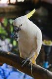 Белый попыгай стоковая фотография rf