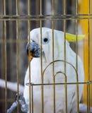 Белый портрет попугая в клетке Стоковая Фотография