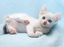 Белый пушистый котенок лежит на сини Стоковое фото RF