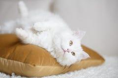 Белый пушистый кот лежа на белом тренере Стоковое Изображение