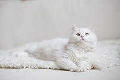 Белый пушистый кот лежа на белом тренере Стоковые Фото