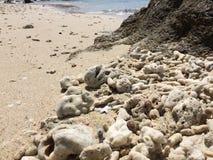 Белый пляж песка коралла Стоковое Фото