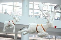 Белый северный олень куклы Стоковое Изображение