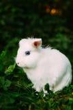Белый смешной кролик зайчика на зеленой траве Стоковые Фото