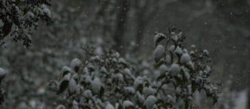 Белый снег в заводах Стоковые Изображения RF