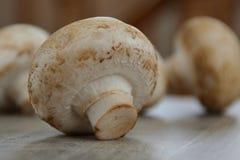 Белый сырцовый гриб Стоковая Фотография RF