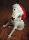 Белый терьер быка в шляпе рождества Стоковое фото RF