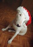 Белый терьер быка в шляпе рождества Стоковая Фотография RF