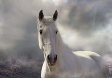 Белый туман стоковые фото