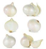 Белый лук изолированный на белой предпосылке Стоковые Фото