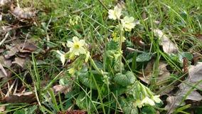 Белый цветок в лесе Стоковые Изображения RF
