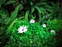 Белый цветок в лесе Стоковые Фото
