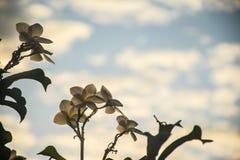 Белый цветок зацветая в утре стоковое изображение