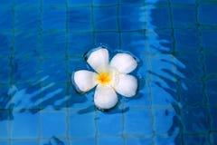 Белый цветок на воде Стоковые Изображения