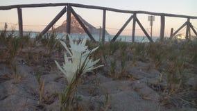 Белый цветок на темносинем Стоковые Изображения