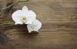 Белый цветок орхидеи стоковое изображение rf
