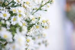 Белый цветок резца для украшает Стоковые Фото