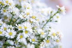 Белый цветок резца для украшает Стоковые Изображения