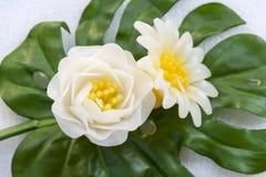 Белый цветок свечи Стоковые Изображения