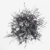 Белый цветок с темной предпосылкой Стоковое Изображение RF